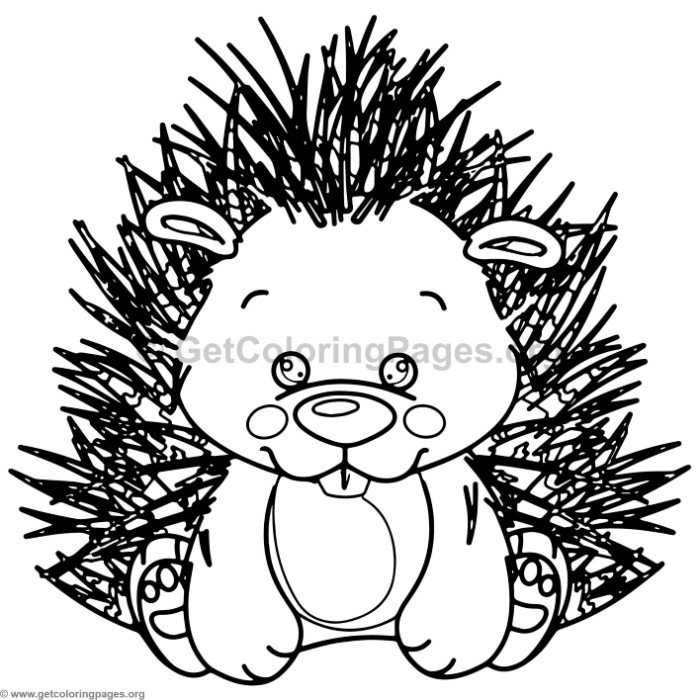 Cute Baby Porcupine Animal Coloring