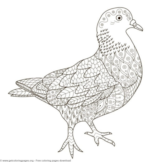 Zentangle Pigeon Pattern Coloring Pages