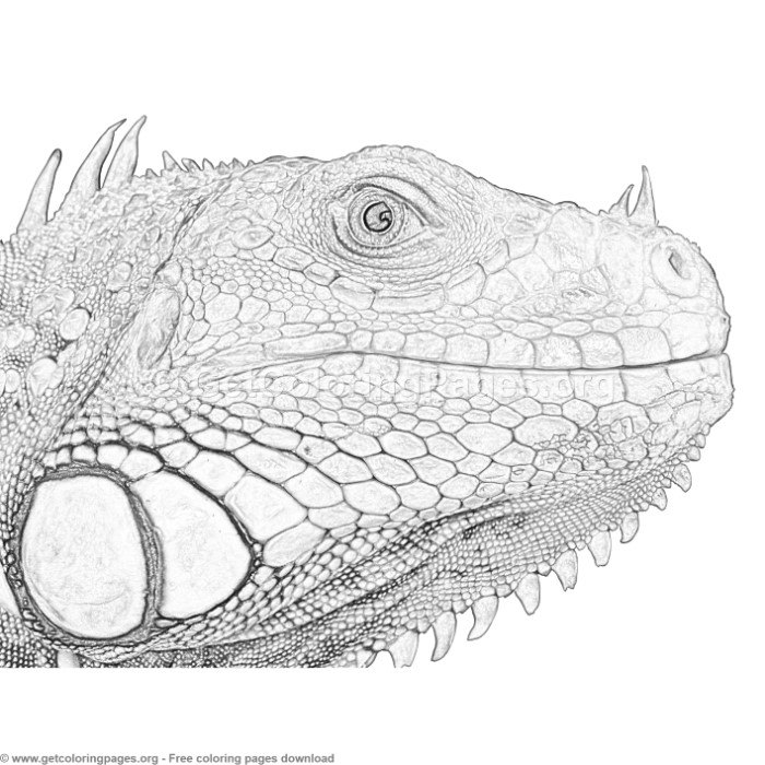1 Grayscale Iguana Coloring Pages - GetColoringPages.org