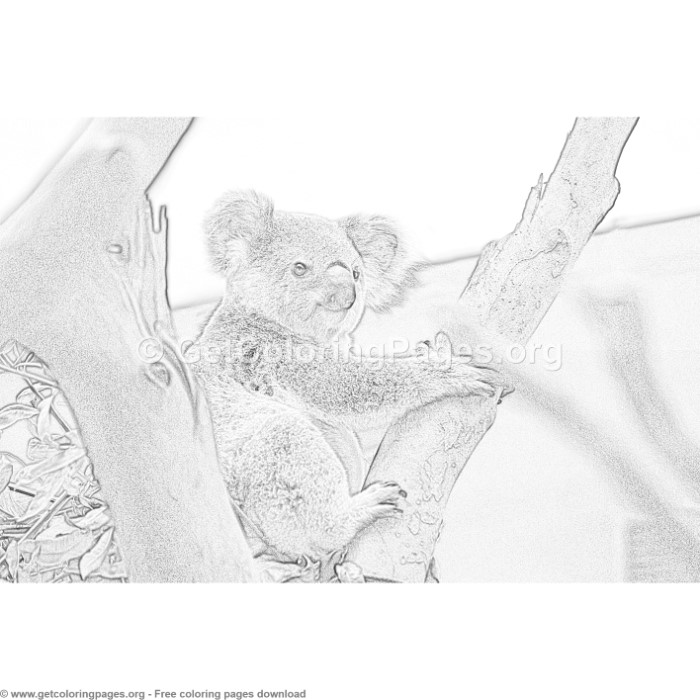 5 Grayscale Cute Koala Coloring Pages Getcoloringpages Org