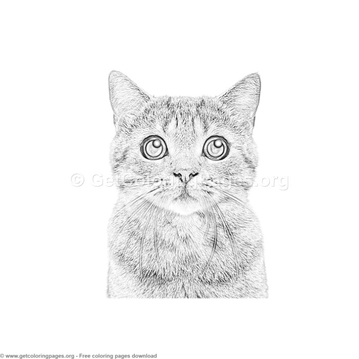4 Grayscale Cat Coloring Pages - GetColoringPages.org