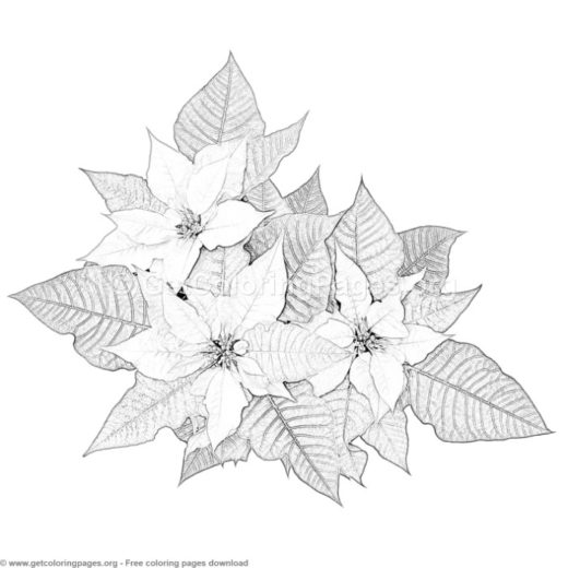 free printable poinsettia template - GetColoringPages.org