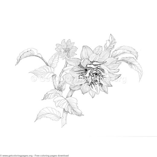 5 Grayscale Exotic Flower Coloring Pages