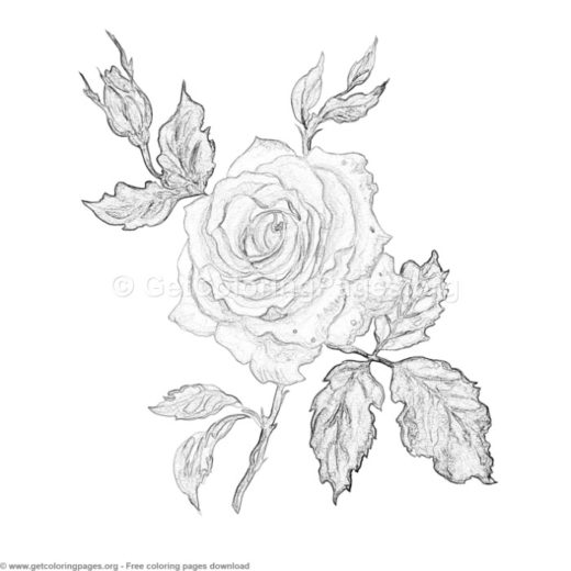 6 Grayscale Exotic Flower Coloring Pages